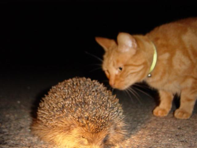 Hedgehog and Poggin